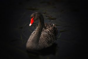 There is black swan inside of us all